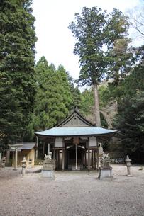 大瀧神社の写真素材 [FYI01589339]