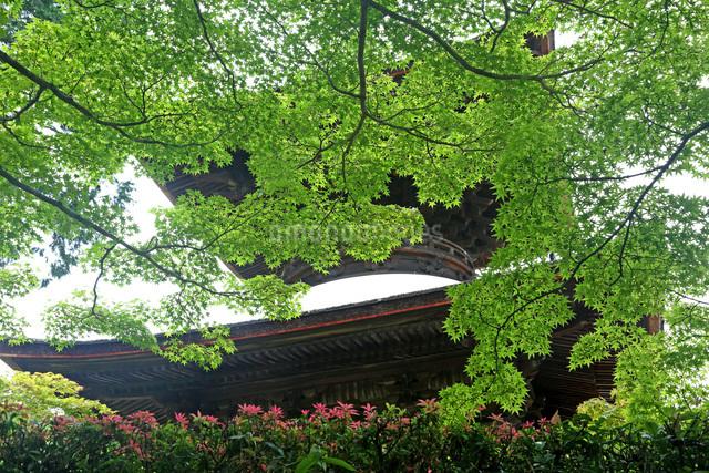 常寂光寺多宝塔新緑の写真素材 [FYI01590263]