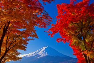 富士山と紅葉の写真素材 [FYI01590411]
