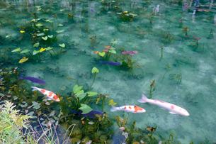 モネの池の写真素材 [FYI01590593]
