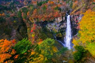 紅葉の華厳ノ滝の写真素材 [FYI01590675]