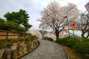 西山公園の桜の写真素材 [FYI01590692]
