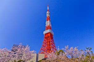 東京タワーと桜の写真素材 [FYI01590757]