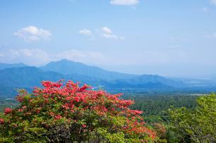 八ヶ岳高原 美しの森の写真素材 [FYI01590778]