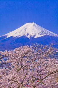 新倉山浅間公園から見た富士山と桜の写真素材 [FYI01590890]