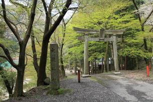 大瀧神社の写真素材 [FYI01590961]