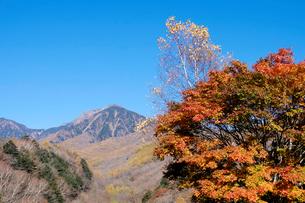 紅葉と八ヶ岳の写真素材 [FYI01591112]