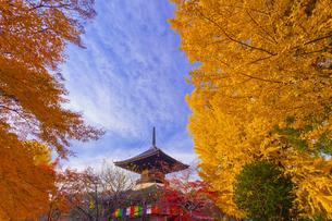 鑁阿寺(ばんなじ)の多宝塔と大銀杏の黄葉の写真素材 [FYI01591127]