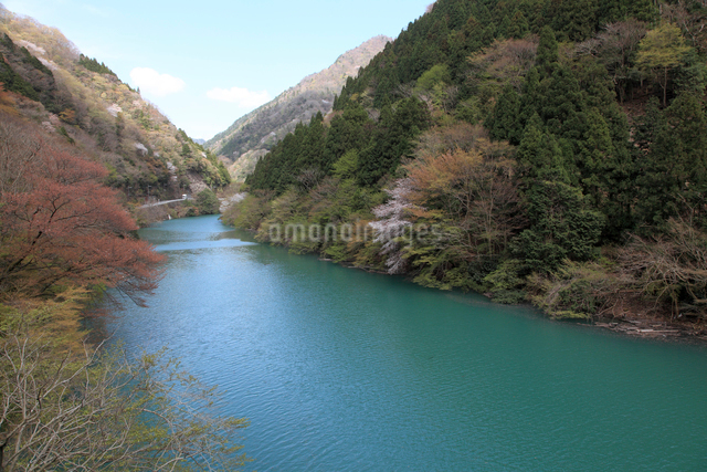 愛知川渓谷(永源寺ダム上流)新緑の写真素材 [FYI01591245]