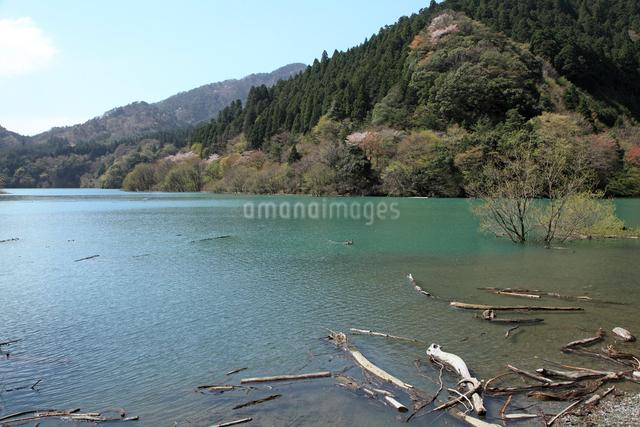 永源寺ダム新緑の写真素材 [FYI01591271]