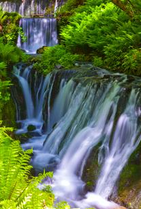 軽井沢の新緑に映える白糸の滝の写真素材 [FYI01591566]
