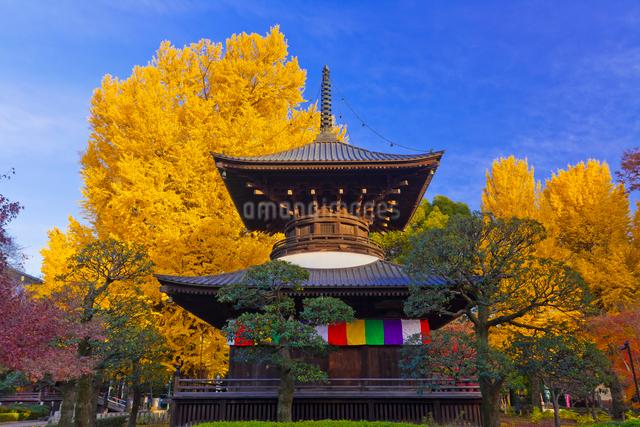 鑁阿寺(ばんなじ)の多宝塔と大銀杏の黄葉の写真素材 [FYI01591686]