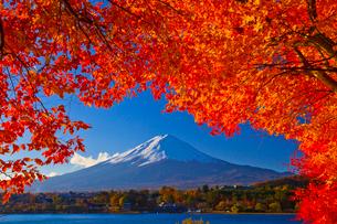 富士山と紅葉の写真素材 [FYI01591720]