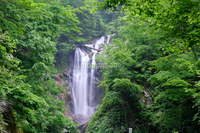 天生中滝の写真素材 [FYI01591730]