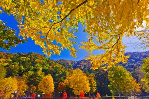 秋の中禅寺 立木観音の写真素材 [FYI01591867]