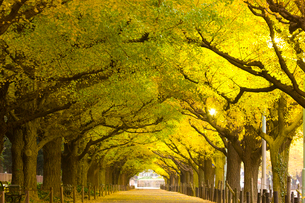 神宮外苑イチョウ並木の写真素材 [FYI01592175]