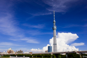 東京スカイツリーと夏雲の写真素材 [FYI01592238]