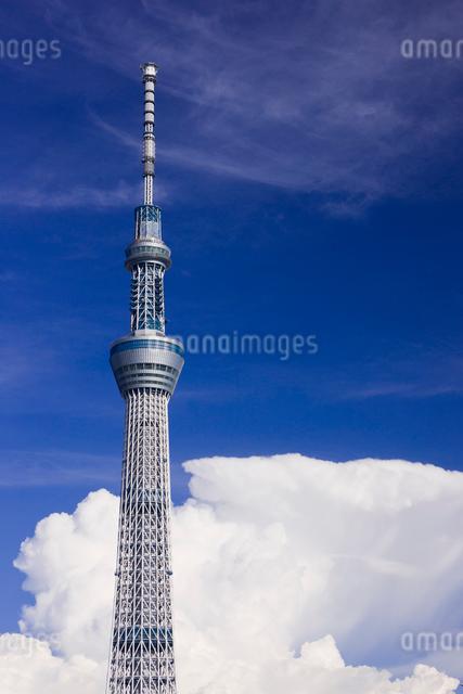 東京スカイツリーと夏雲の写真素材 [FYI01592246]