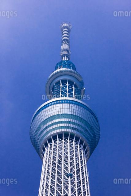 東京スカイツリーの写真素材 [FYI01592303]