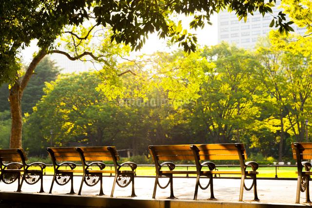 日比谷公園のベンチの写真素材 [FYI01593042]