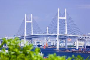 港の見える丘公園より望む横浜ベイブリッジの写真素材 [FYI01593199]