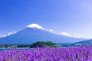 夏の富士山とラベンダーの咲く大石公園の写真素材 [FYI01593244]