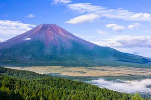 夏の富士山の写真素材 [FYI01593260]