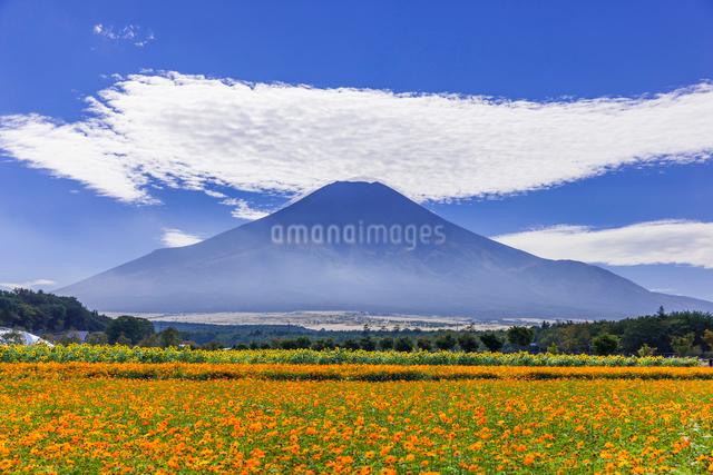 初秋の富士山の写真素材 [FYI01593343]