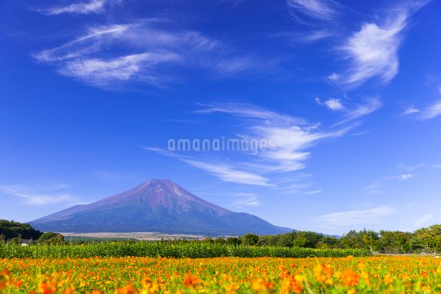 初秋の富士山の写真素材 [FYI01593473]