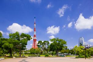 東京タワーと芝公園の写真素材 [FYI01593563]