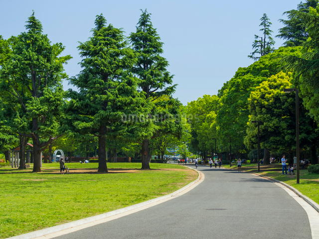 代々木公園の写真素材 [FYI01593640]