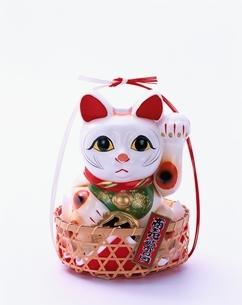 招き猫と水引きの写真素材 [FYI01593655]