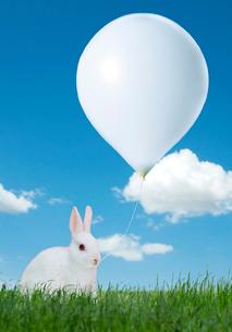 草原のうさぎと風船の写真素材 [FYI01593663]