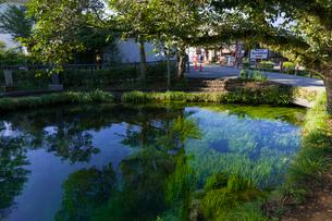 忍野八海 湧池の写真素材 [FYI01593677]