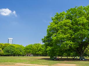 代々木公園の写真素材 [FYI01593995]