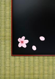 畳の上の漆塗りの盆と桜の写真素材 [FYI01594038]