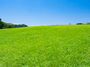 芝生と青空の写真素材 [FYI01594173]