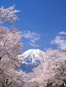 富士山と桜の写真素材 [FYI01594660]