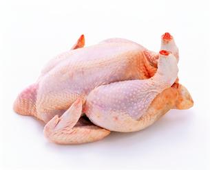 鳥肉の写真素材 [FYI01594664]