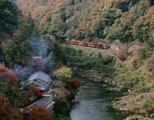 秋の嵐山 トロッコ列車の写真素材 [FYI01595051]