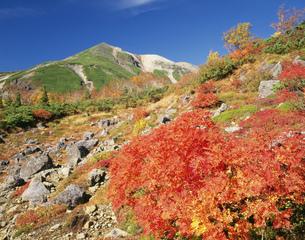 ナナカマドと乗鞍岳の写真素材 [FYI01595200]