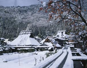 柿と雪の茅葺き民家の写真素材 [FYI01595243]