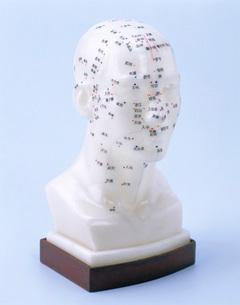 ツボを記した人形の写真素材 [FYI01595314]