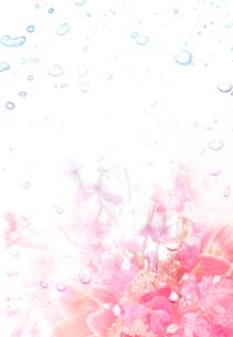 花と泡の背景イメージの写真素材 [FYI01595383]