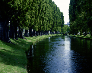 エイボン川と並木の写真素材 [FYI01595391]