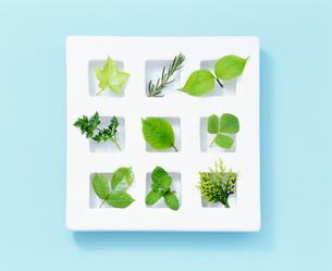 9種の新緑の写真素材 [FYI01595403]