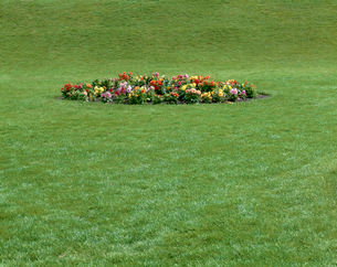 公園の花壇の写真素材 [FYI01595541]