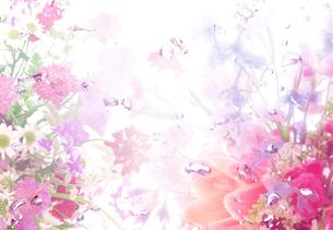 花と泡の背景イメージの写真素材 [FYI01595692]