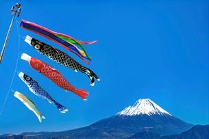 こいのぼりと富士山の写真素材 [FYI01595818]