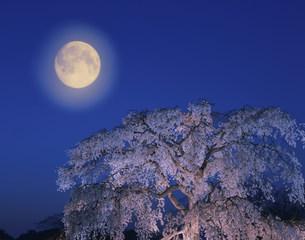 枝垂れ桜と満月の写真素材 [FYI01595978]